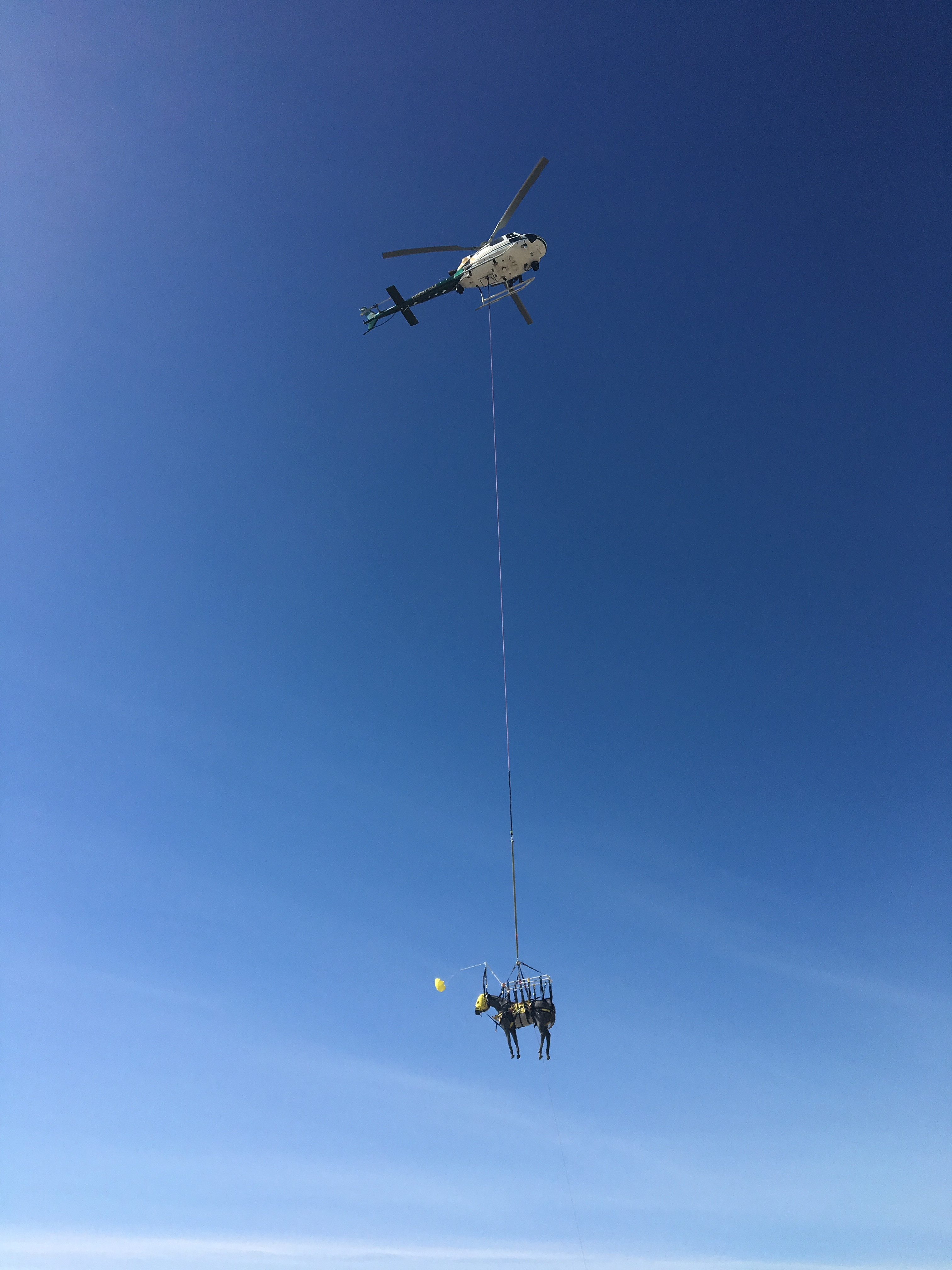 training horse with helicopter