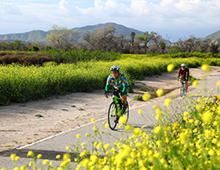 Bikers riding bikes on the Santa Ana River Trail with grass on one side and yellow flowers on the other